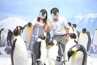 ペンギン  指輪